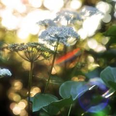Kräuterwunder und Pflanzenschätze
